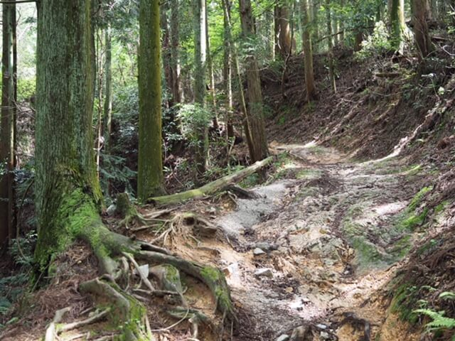 高取城 城道(本荘)